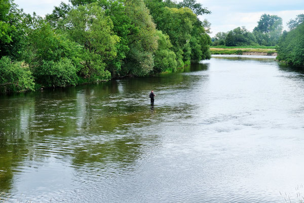 Sogar Fliegenfischen funktioniert hier in der Donau noch