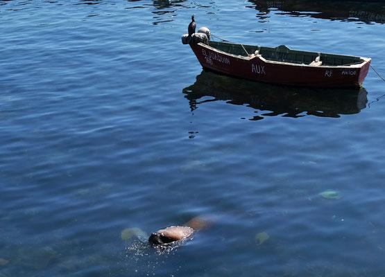 natürlich dürfen auch hier die Robben und Kormorane nicht fehlen