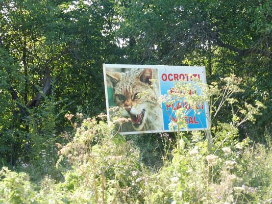 ...und wilde Tiere zum Beobachten
