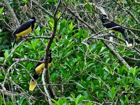 Wunderschöne farbige Vögel.....