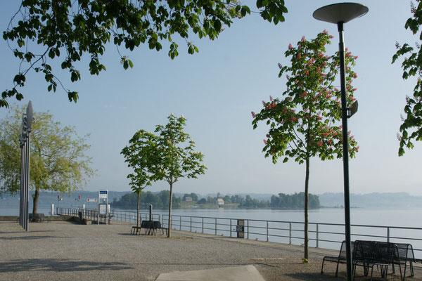 Morgenstimmung am Zürichsee,  Blick auf die Insel Ufenau