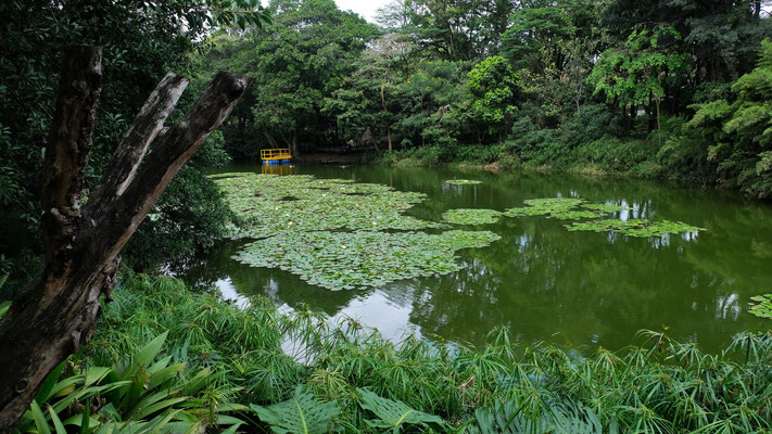 Im botanischen Garten von Medellin...