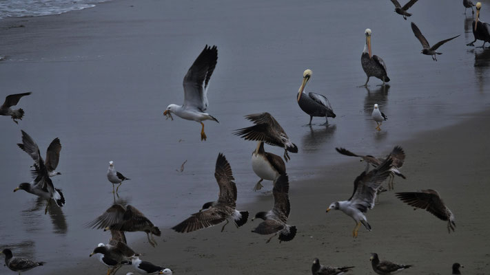... auch für die Vögel fällt was ab.