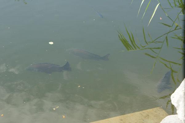... mit Fischen, die auf die Angel warten