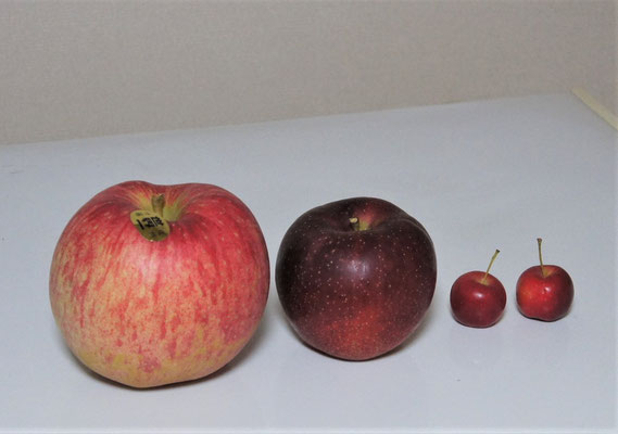 善光寺境内で求めたリンゴ、左から「世界一」「秋映」「?」です。