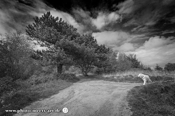 Fotografie - Tiere - Natur - Umwelt - Hunde - Fotos by Ivano Fargnoli - www.photo-meets-art.de - Rommerskirchen