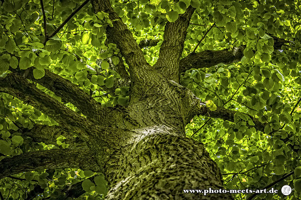 Fotografie - Tiere - Natur - Umwelt - Fotos by Ivano Fargnoli - www.photo-meets-art.de - Rommerskirchen