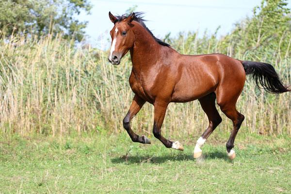 馬の種類 中間種