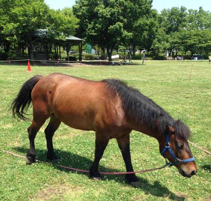 馬の種類 在来種