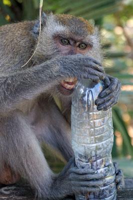 Der Affe hat schöne weiße Zähne.