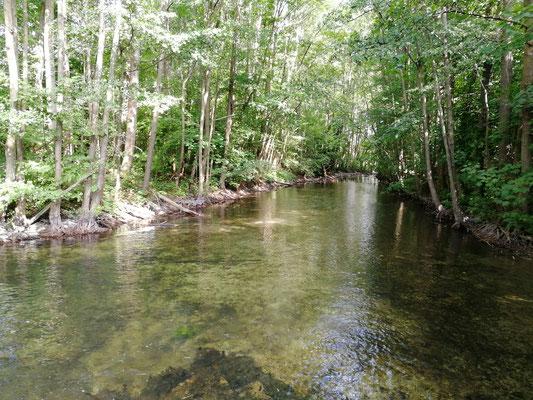 Ein frische Bach mitten im Wald