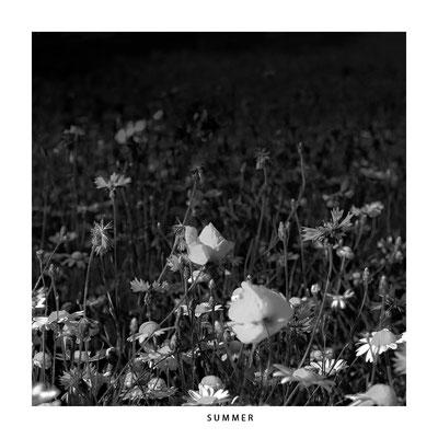 "#0043 ""Seasons: Summer"" Ltd of 5"