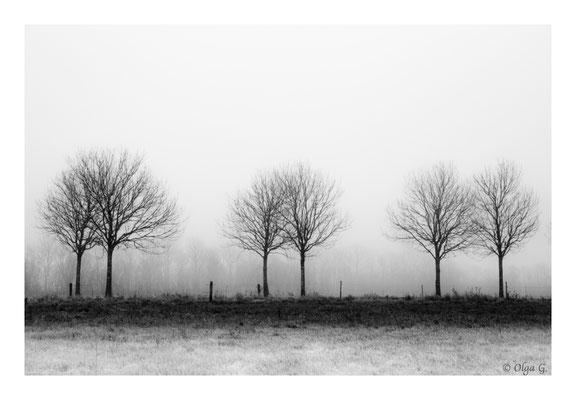 #0035 Misty landscape with 6 trees (Guldager, Esbjerg, DK) Ltd of 10