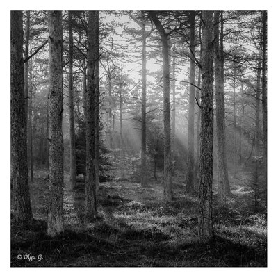 "#0040 ""Lighting up the forest"" ( Ho, Blaavand, Dk, 2018)   Ltd of 10"