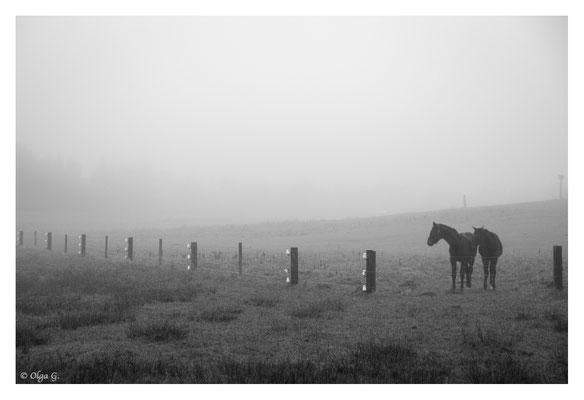 "#0053 ""Fog- Just 2 of us II (Horses) (Sjelborg, Esbjerg, DK, 2018   Ltd of 10"