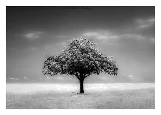 #0019 The Tree N.2 Ltd of 30