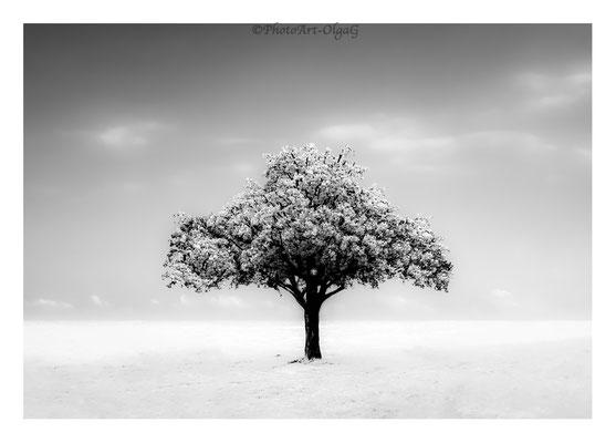 #0018 The Tree N.1 Ltd of 30