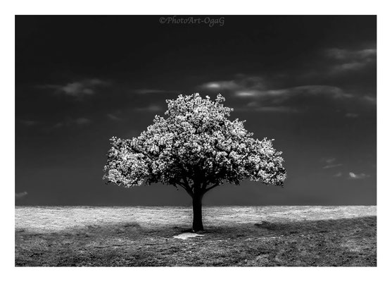 #0020 The Tree N.3 ltd of 30