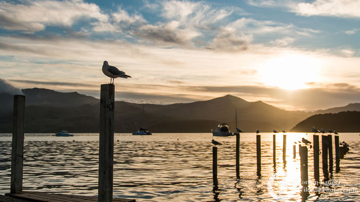 Sunset at Akaroa Harbour