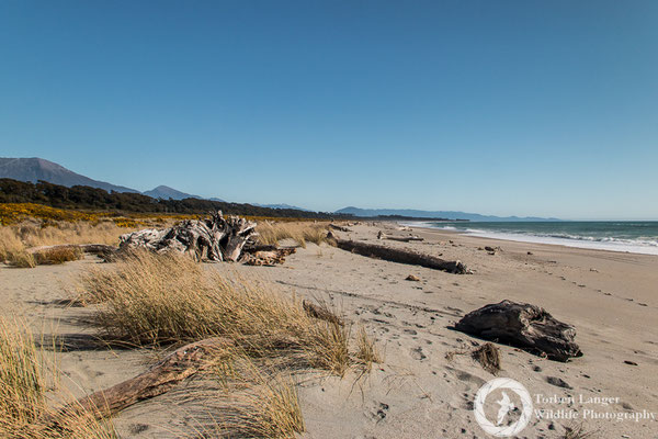 Haast Beach at the west coast