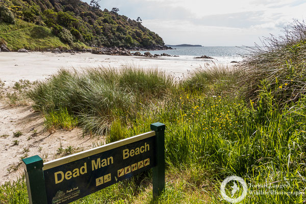 Dead Man Beach on Stewart Island