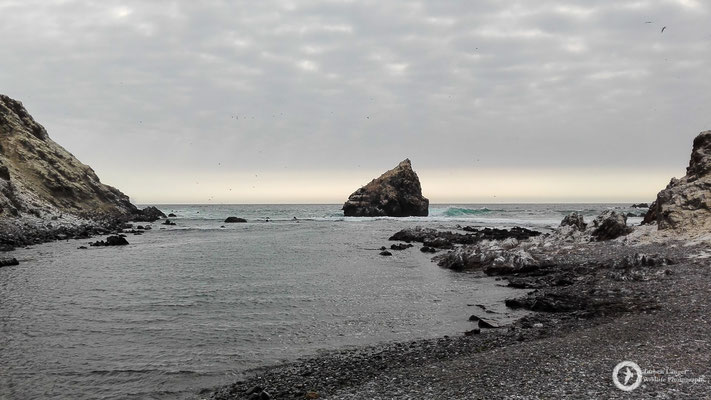 Isla Foca