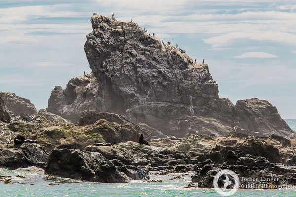 A bird rock close to Kaikoura