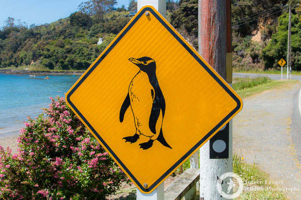 Watch out for the Penguins!