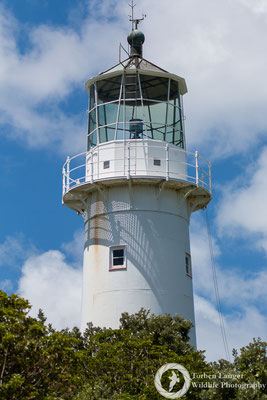 The lighthouse of Tiritiri Matangi
