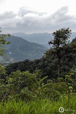 Area de Conservacion Regional Cordillera Escalera