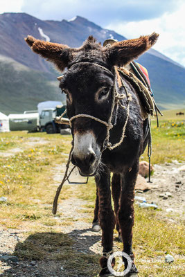 A donkey on the pass
