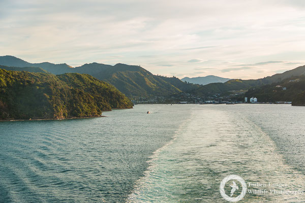 On the ferry from Picton to Wellington
