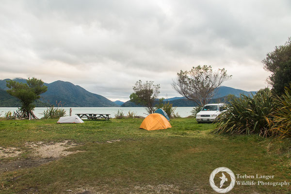 Camping at the Marlborough Sounds