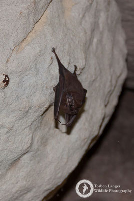 Bat / Fledermaus