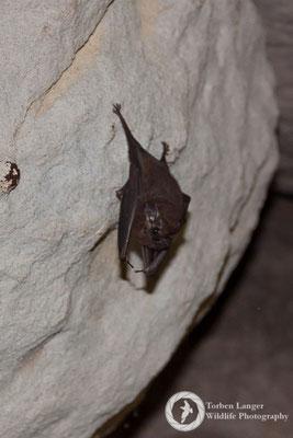 Bat / Fledermaus