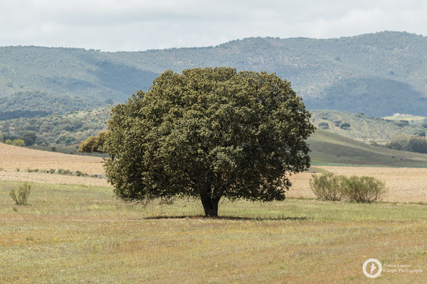 A nice tree... isn't it?