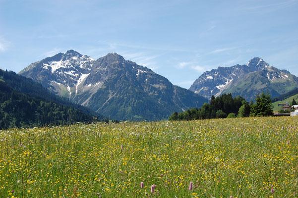Blumenwiese mit Blick Richtung Mittelberg