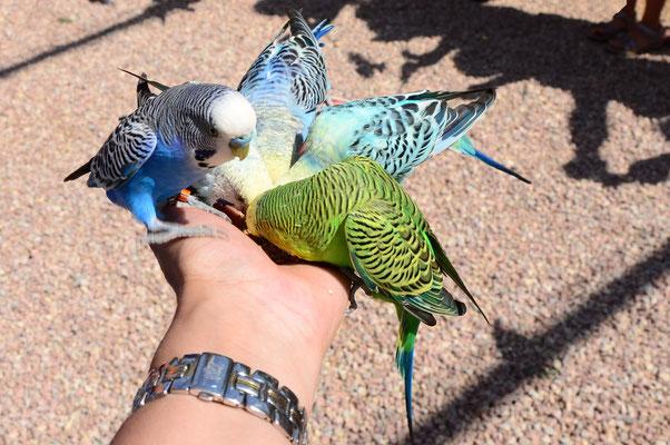 Se laisser toucher par des oiseaux gourmands