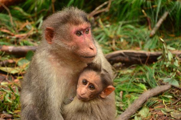 Maman Macaque et son petit