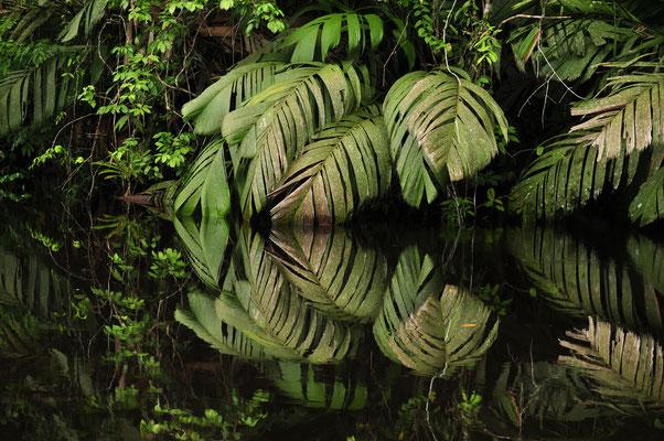 Parc national de Tortugueiro, Costa Rica