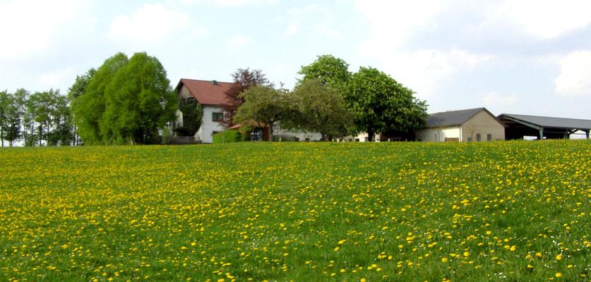 Ferienhof Rheinland Pfalz Eifel