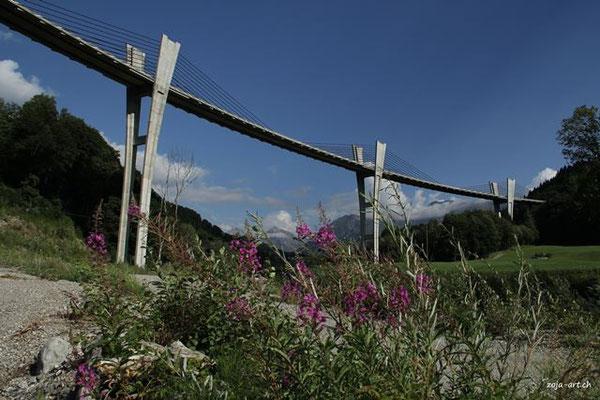 8006 sunnibergbrücke mit weidenröschen