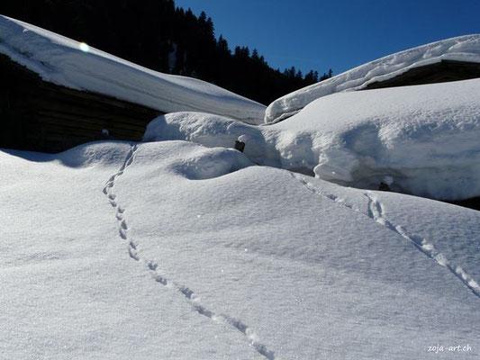 9707 spuren im schnee