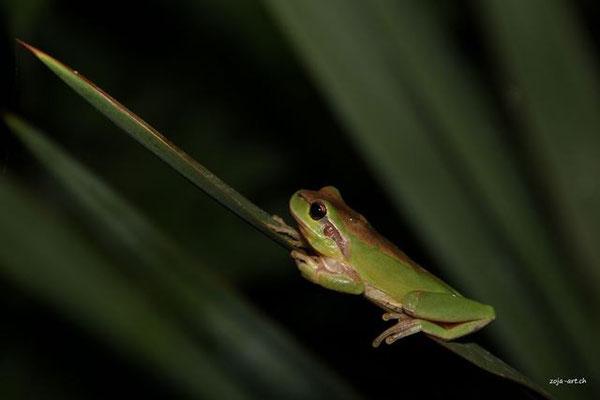 4300 frosch