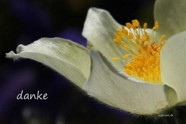 3034a anemone danke