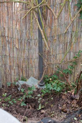 Die Uetersener Klosterrose ist in den Stillen Garten umgezogen. Ihre Äste zieren noch den Pavillon, damit es nicht so nackt aussieht.