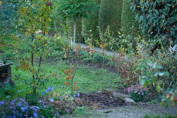 Oktober 2016 - Die Baumschule hat die Pflanzen ersetzt, also das ganze nochmal...