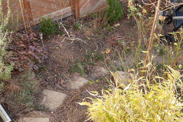 6. Januar - Durch den Schatten vom Nachbarhaus wird die Krokusblüte ab diesem Jahr erheblich später beginnen