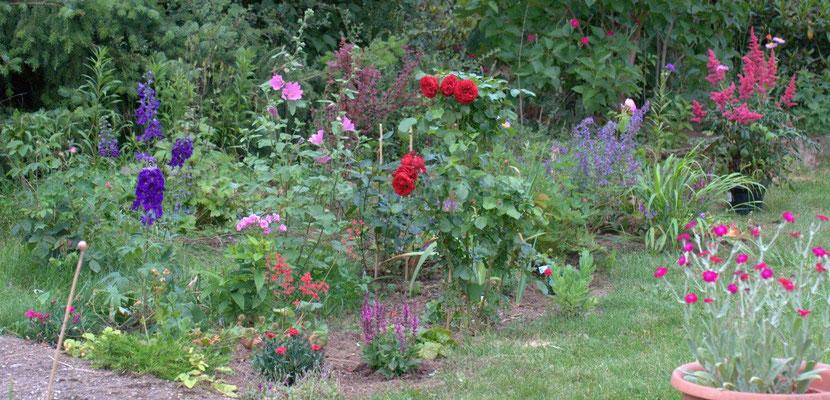 Rotkäppchen war die erste Rose, die ich hier in den Wiesenfilz gepflanzt hatte. Sie hat den Rehverbiss vom Frühling gut weggesteckt.