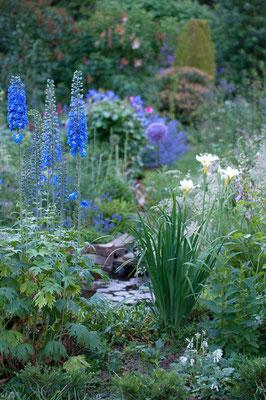 Iris sibirica 'White Swirl', Rittersporn, .....